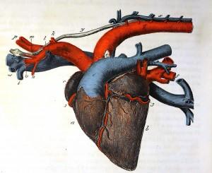 Coeur (5)