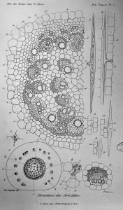 Structure des aroïdées Thèse, 1867. Cote 6071