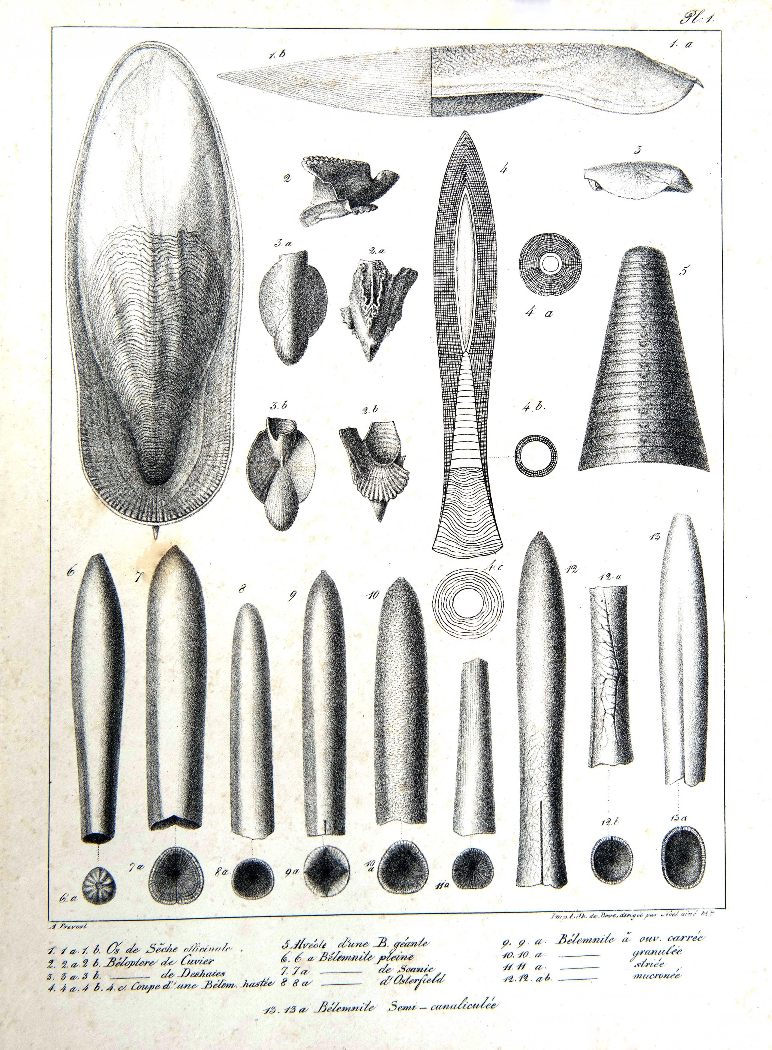 Paléontologie (14)