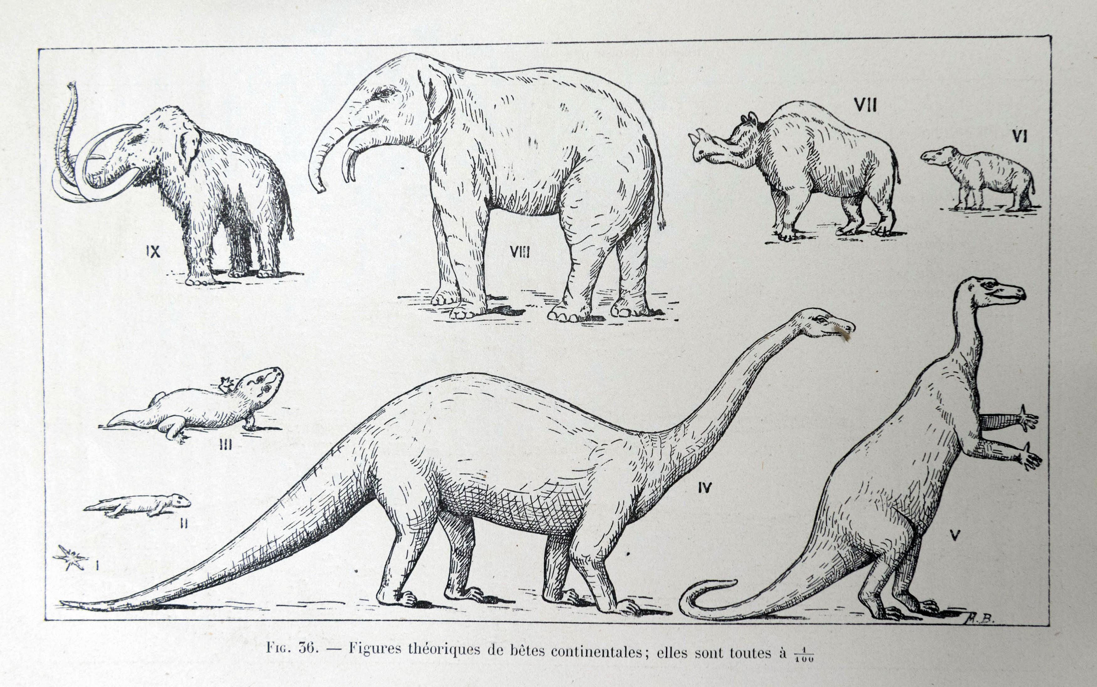 Paléontologie (5)