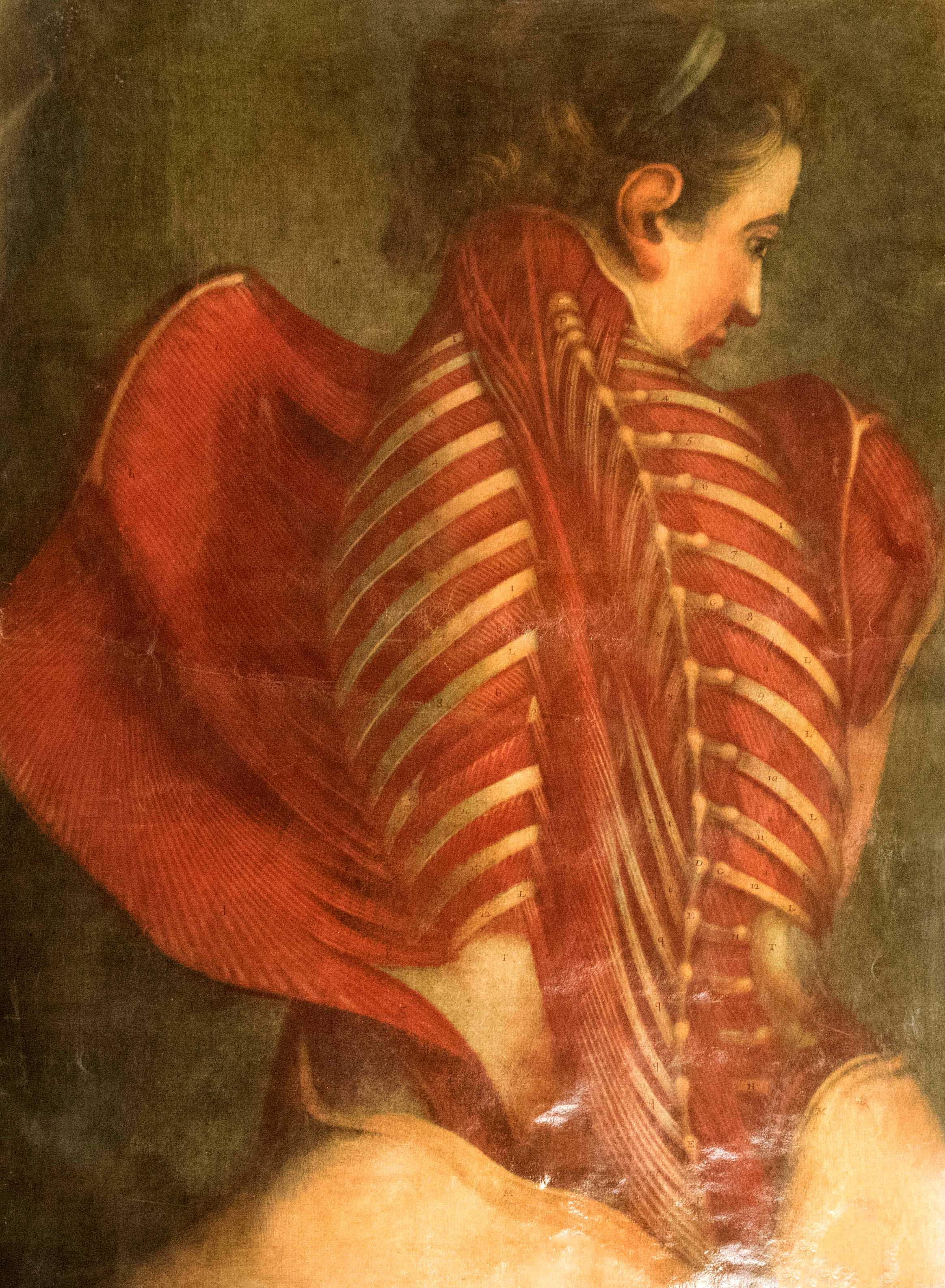 Planches anatomie (1)