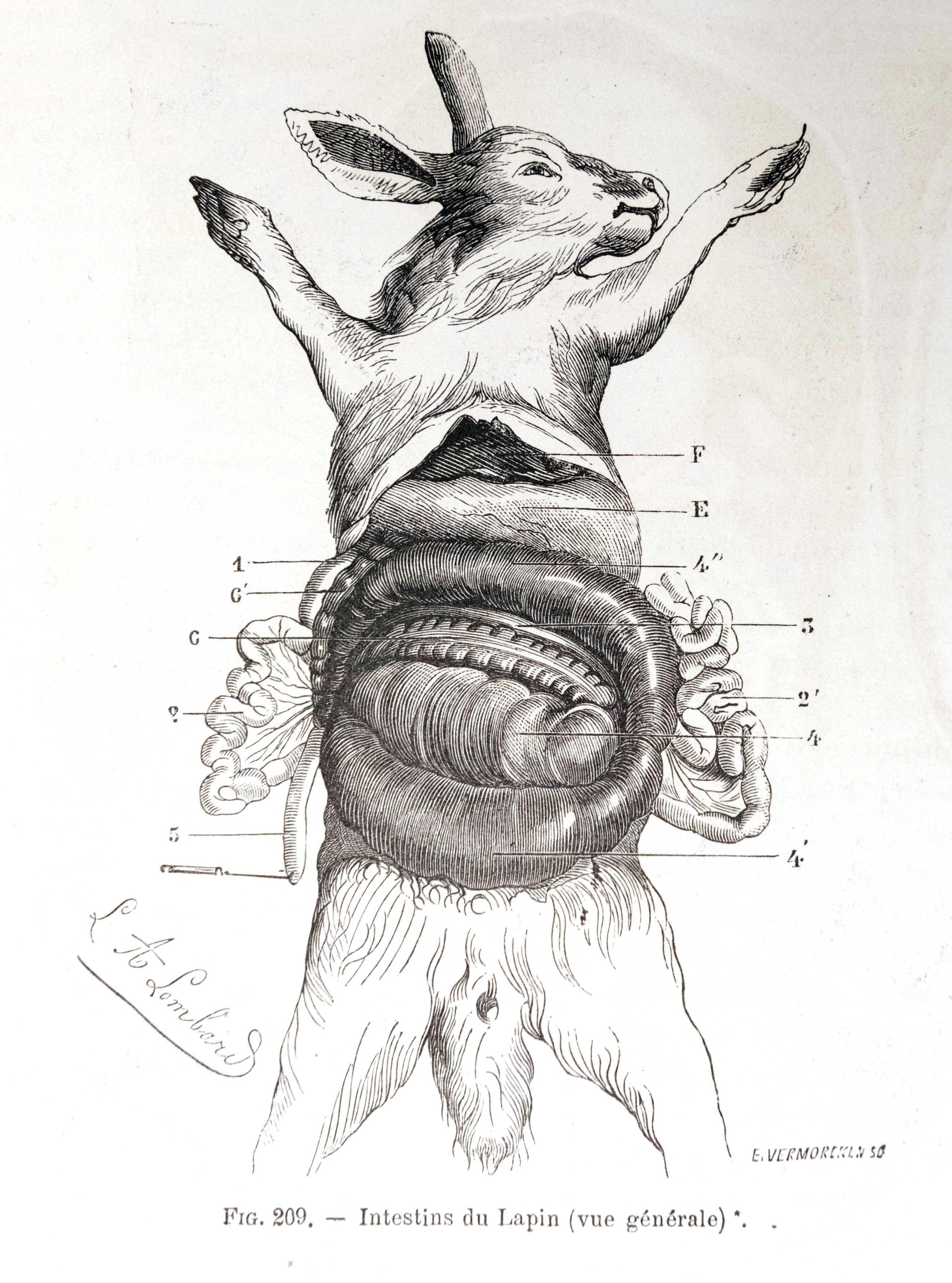 Planches anatomie (12)