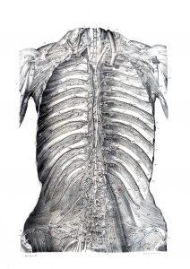 Traité d'anatomie ancien (4)