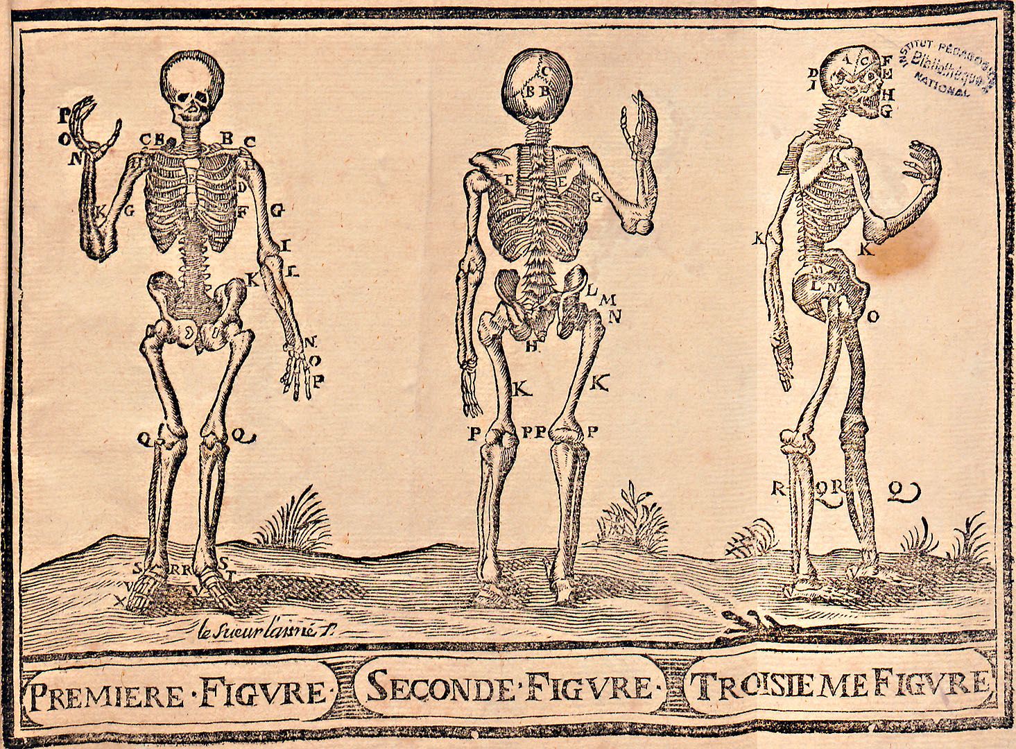 L'art de dessiner par Jean Cousin, planche squelette