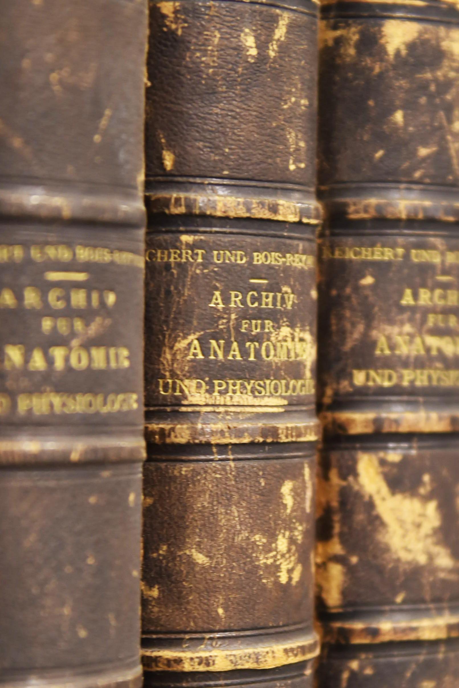 Archiv für Anatomie und Physiologie 3