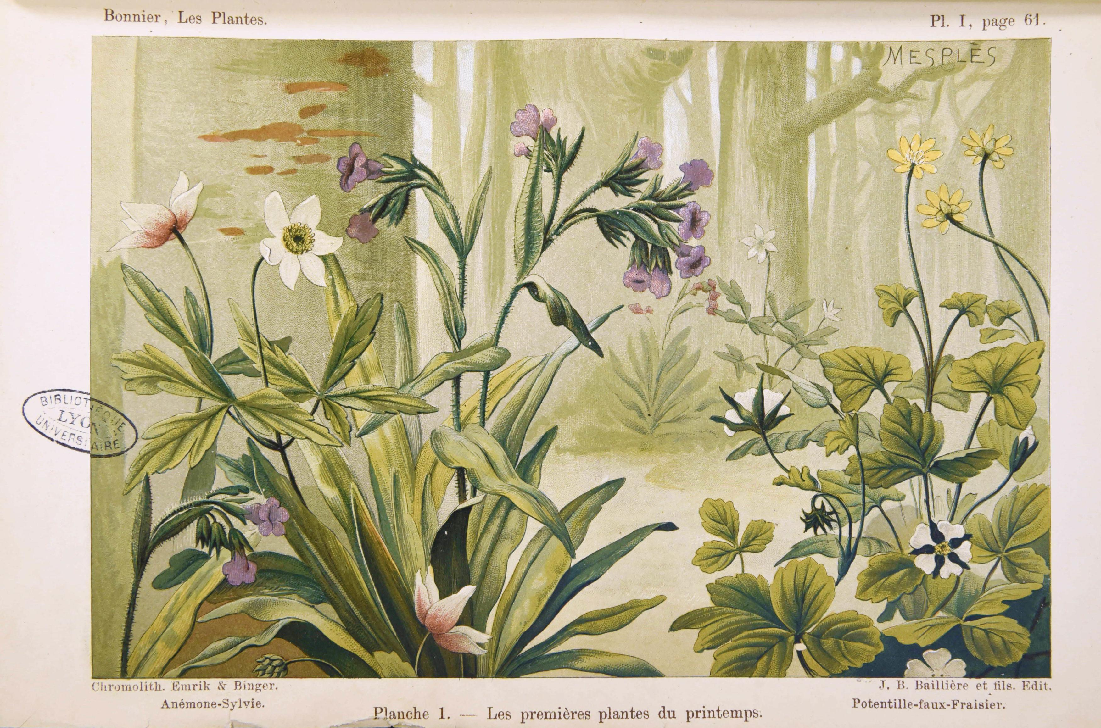 Bonnier - Les plantes 1