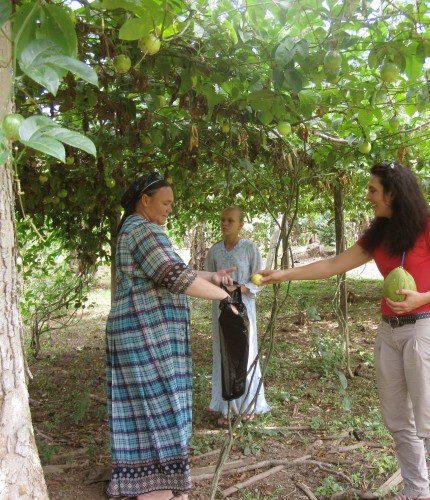 La famille (7 enfants et les deux parents) s'est installée l'année dernière dans le Norte La Paz (2012). Ils ont acquis une propriété de 460 has après avoir vendu la propriété de 3000 has qu'ils possédaient dans l'Etat d'Amazonas (Brésil).