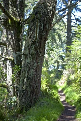 """Path par """"Glenngould"""" (publié sous pseudonyme sur FlickR, sous licence Creative Commons, Paternité)"""