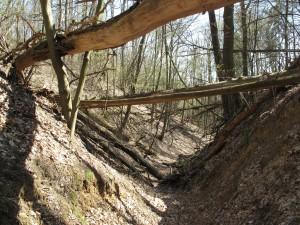 Die Wolfsschlucht bei Pritzenhagen/Oberbarnim, Brandenburg. Das Kerbtal ist wesentlich durch einige wenige Erosionsereignisse in der ersten Hälfte des 14. Jahrhunderts geprägt. (Quelle: Wikimedia Commons)