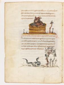Devil in a tub and salamander.