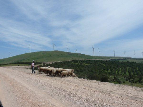 Berger rencontré sur l'une des routes créées pour relier les plateformes éoliennes (Photo E.A)