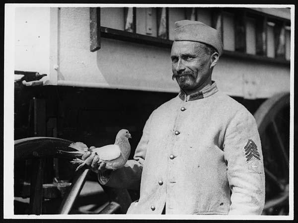 homme et pigeon