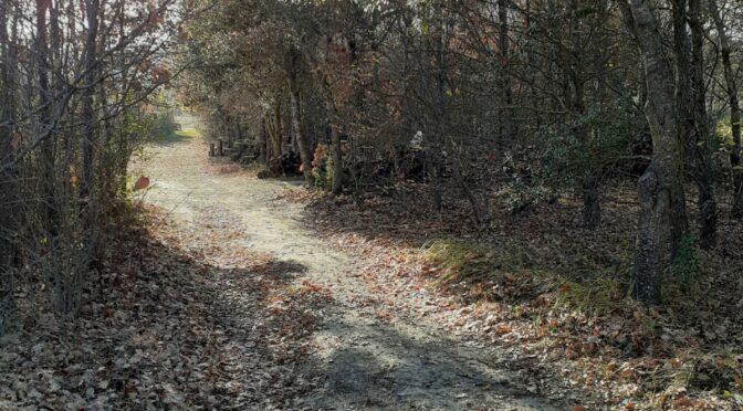 Avent -9 : La chênaie blanche ou le jardin disparu