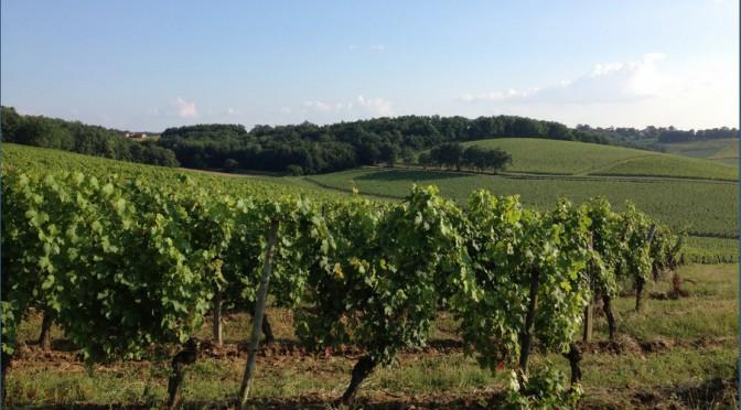 «Les petits vignobles : des terroirs en quête de légitimité et d'identité»