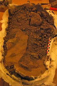 Figure 3 : Fouille en laboratoire de l'une des sépulture (photo M. Poulmarc'h)