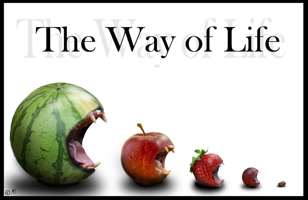 the-way-of-life-ea0e68de-dca9-48d9-b7e1-1a2e0cc1d073