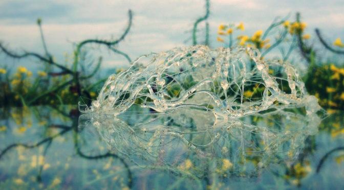 Science ouverte : éthique, transparence et reproductibilité