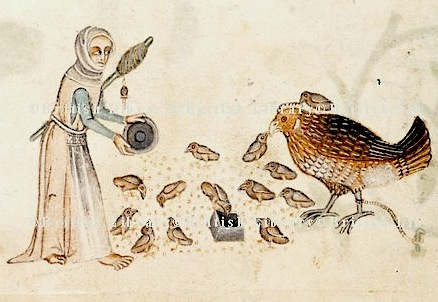 Woman feeding a hen and chickens, circa 1325-1335. London, BL, Add. 42130, f.166v