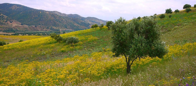 Études sur les Jbala, Maroc