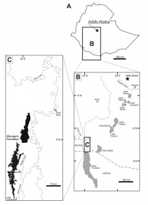 Localisation du site de Shungura / Localisation of Shungura site