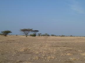 Fig. 3. Overgrazed sites in Allideghi Wildlife Reserve (© R. Moreaux)
