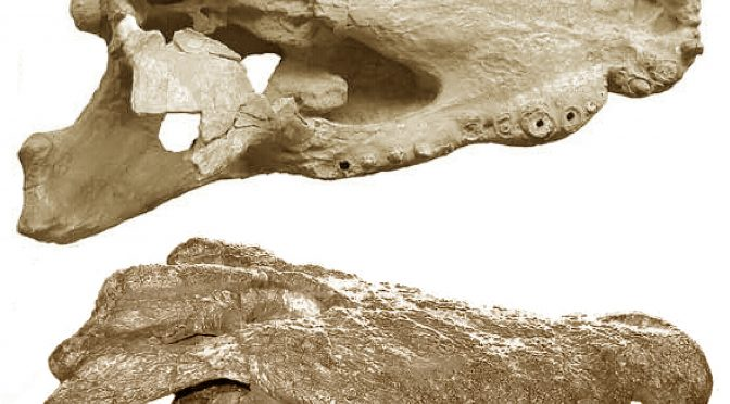 The Giant Horned Crocodiles that Ate our Ancestors