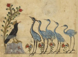 arabe 3465 - f.97
