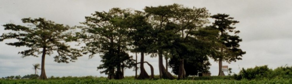 Les bois sacrés en Afrique