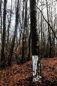 Arbor-Essence