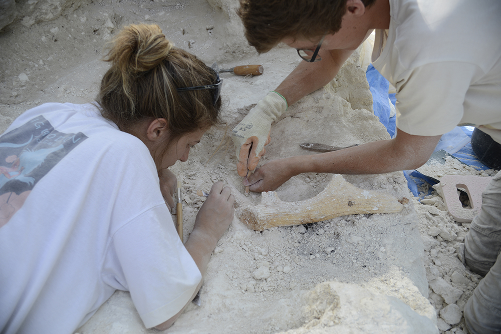 Base d'andouiller de cerf en cours de fouilles sur le site de Vert-la-Gravelle « La Crayère »