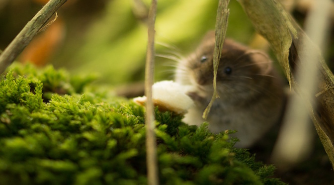 Petite souris cachée