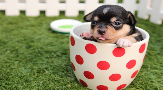 Petit chiot dans une tasse