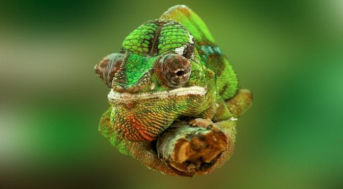 Le surprenant homme-caméléon (chronique 65)