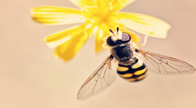 Les mathématiciennes abeilles (chronique 69)