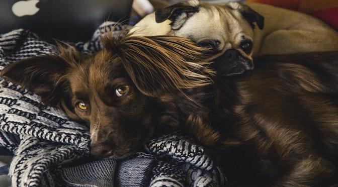 Le physionomisme canin (épisode 88)