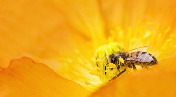 Les arithméticiennes abeilles (épisode 92)