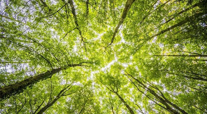 L'apaisante forêt (épisode 108)