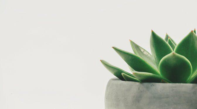 Les bienfaisantes plantes (épisode 165)