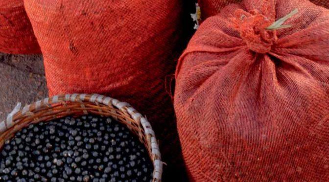 Sciences au Sud: L'alimentation devient patrimoine