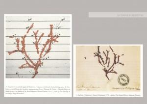 Superposition du corail et du diagramme de l'évolution de Darwin. Les Coraux de Darwin, Horst Bredekamp