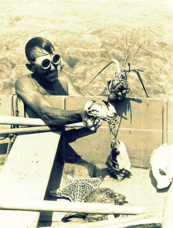 Captain Bill Gray collecting crabs and other marine specimens - Dinner Key. No know copyright restriction. https://www.flickr.com/photos/floridamemory/13902347193/