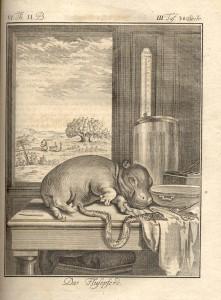 hippo.buffon (3)