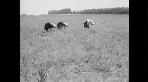Extrait de Chi Legge (RAI Télévision, réalisé par Mario Soldati 1952) in Résistance Naturelle (00:26:45)