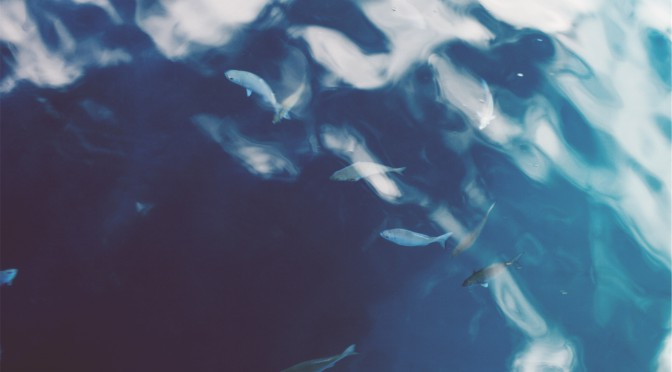 Réactions au projet de Convention sur la conservation et l'exploitation durable de la biodiversité en haute mer