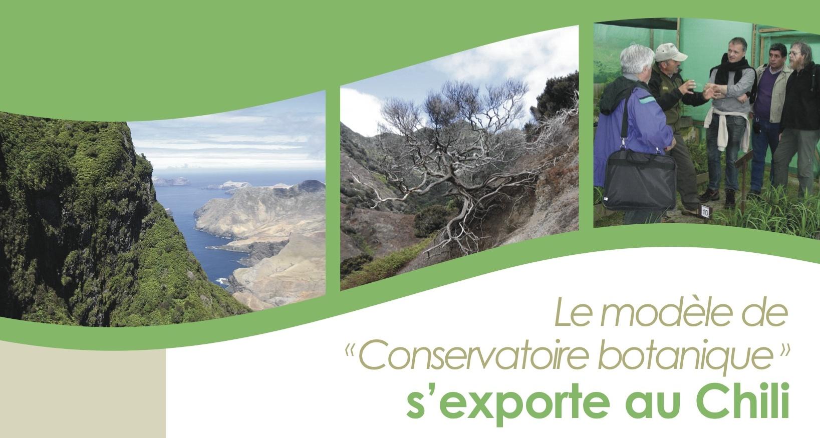 coop botanica Juan Fernandez recortada arriba