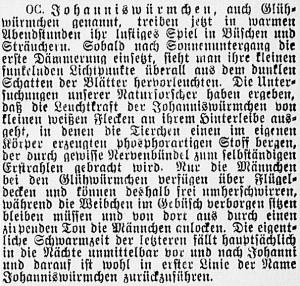 19150613_Glühwürmchen_566