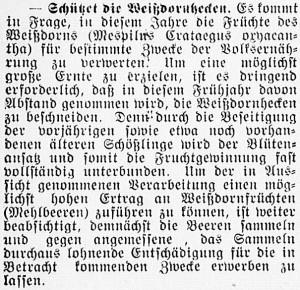 19160430_Weißdornhecken_297