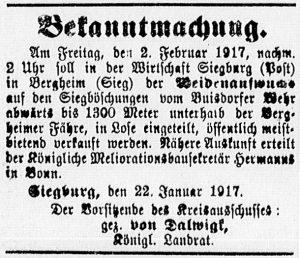19170128_weidenaufwuchs_541