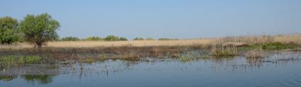 Le site de Taraschina sous les eaux du Danube - avril 2013