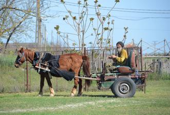 Charette à Caraorman